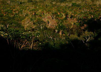 Rain Forest near Puerto Maldonado, Tambopata province, Madre de Dios region, Peru.